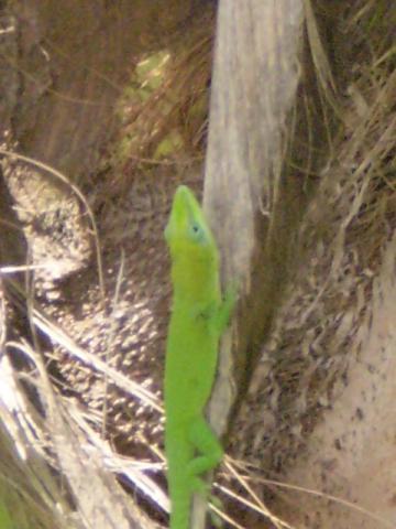 petite salamandre